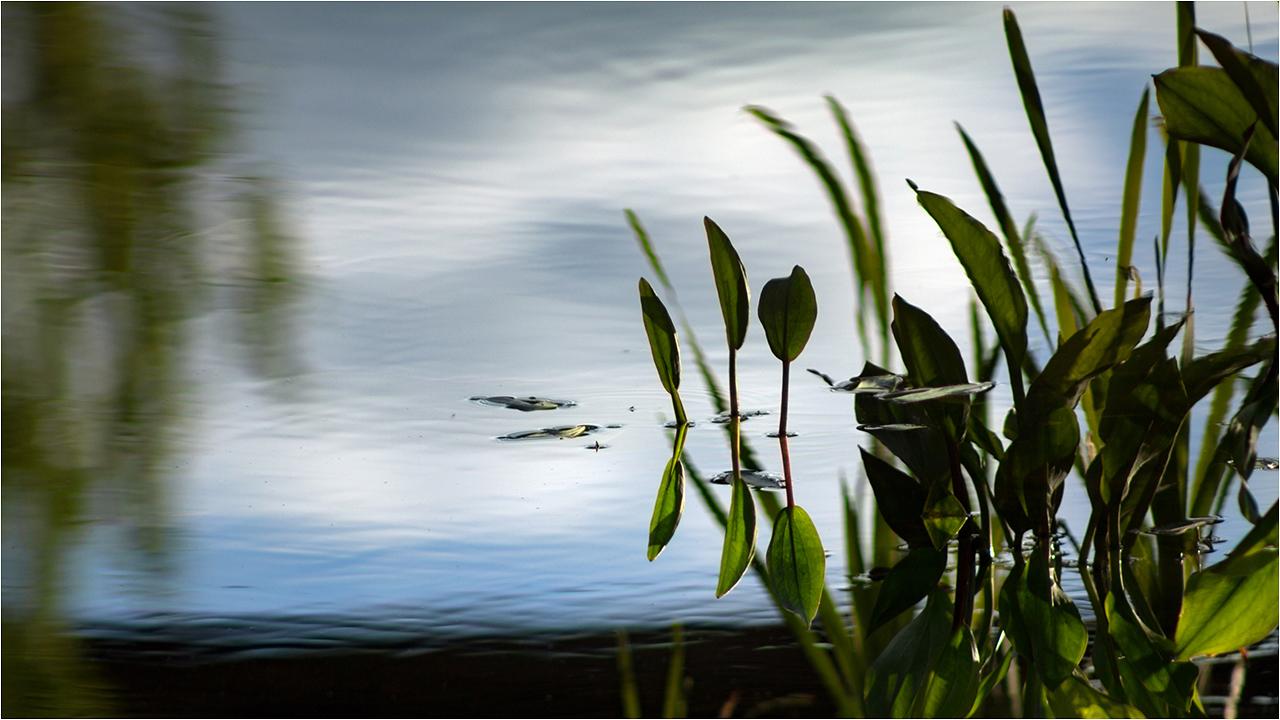 """photo """"***"""" tags: nature, travel, misc., water, железная дорога, листья, отражение"""