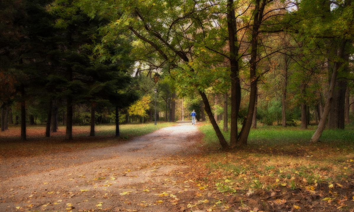 "photo ""***"" tags: nature, autumn, park"