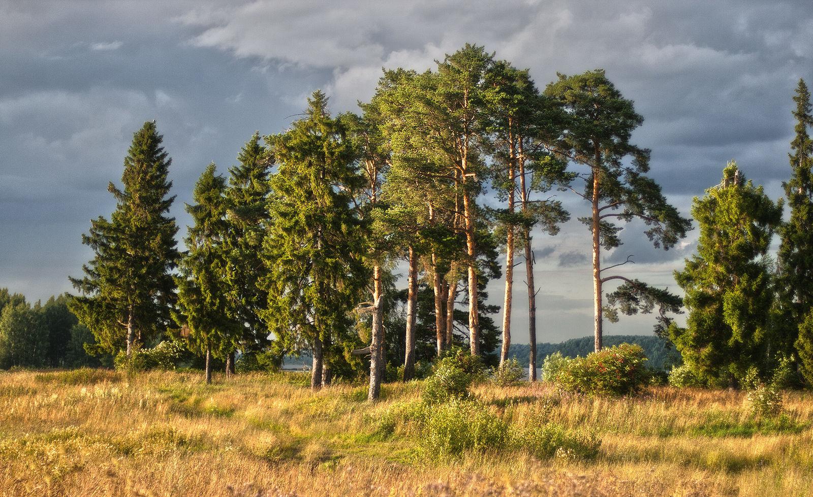 красивые места, на опушке соснового леса фото игрушки, которые могут