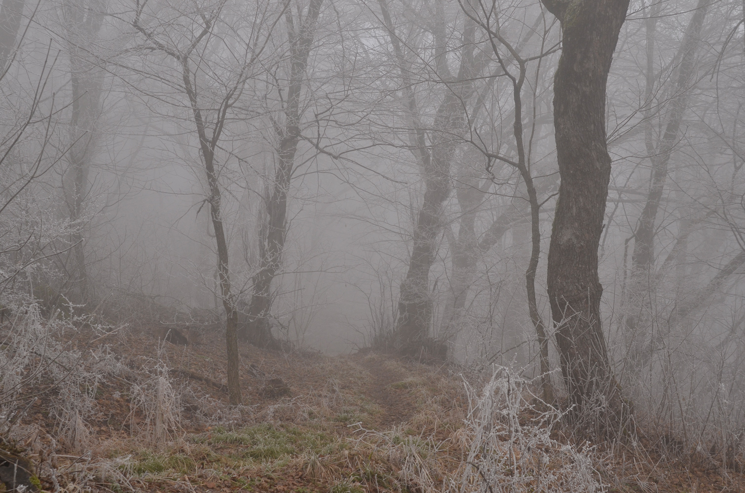 "photo ""***"" tags: landscape, fog, park, изморозь"