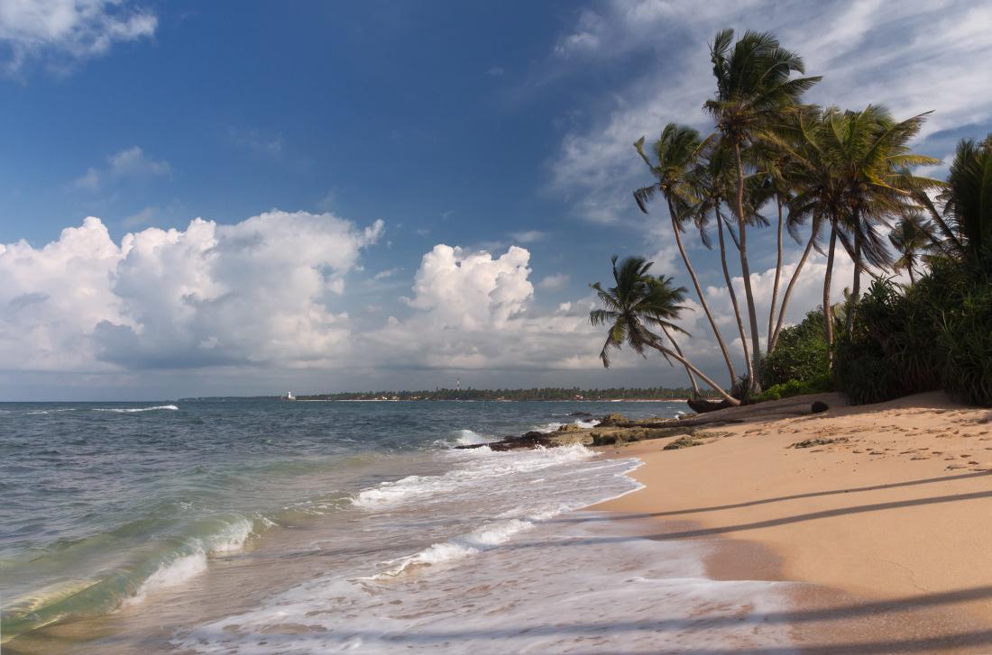 """фото """"Букет пальм"""" метки: пейзаж, путешествия,"""