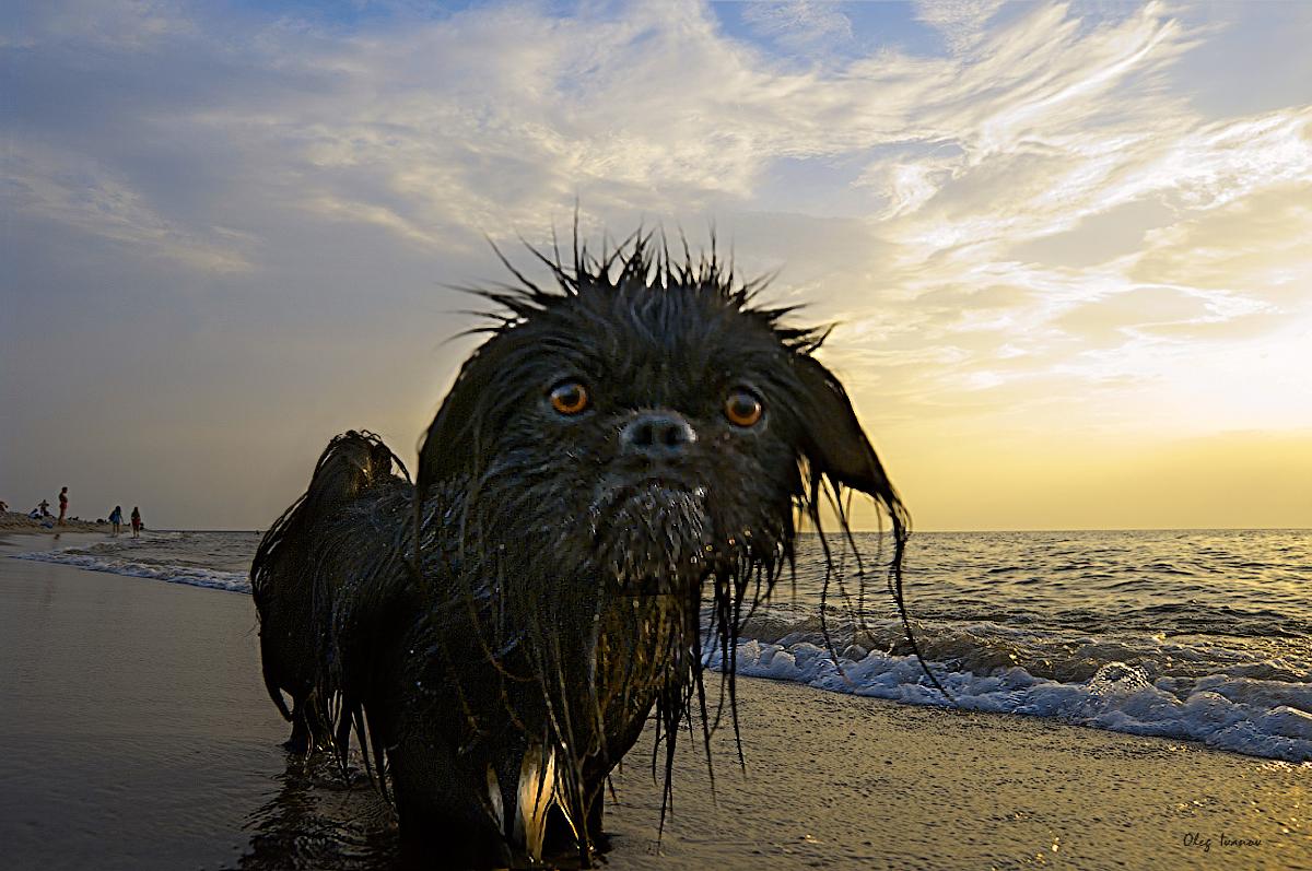 """фото """"Морской волк"""" метки: разное, юмор,"""