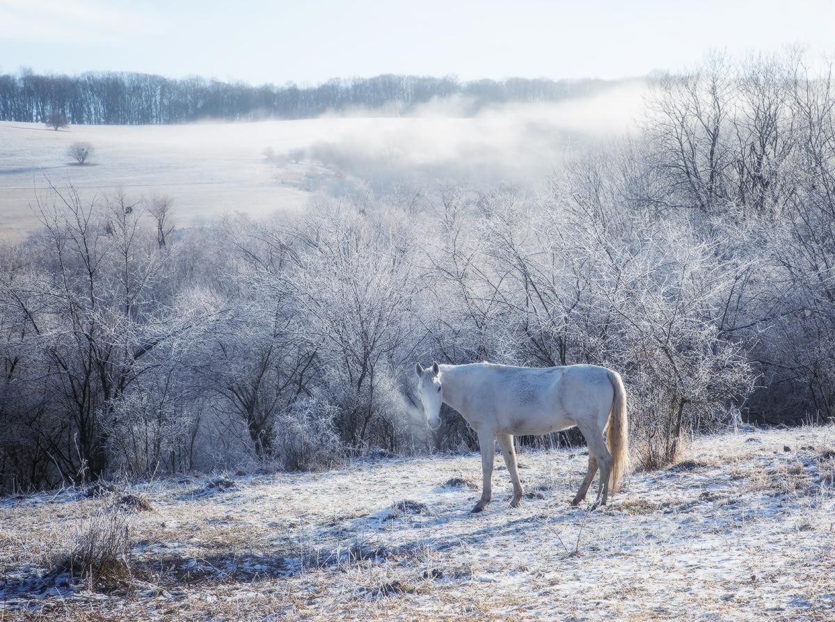 """photo """"***"""" tags: , winter, Балкария, Кавказ"""