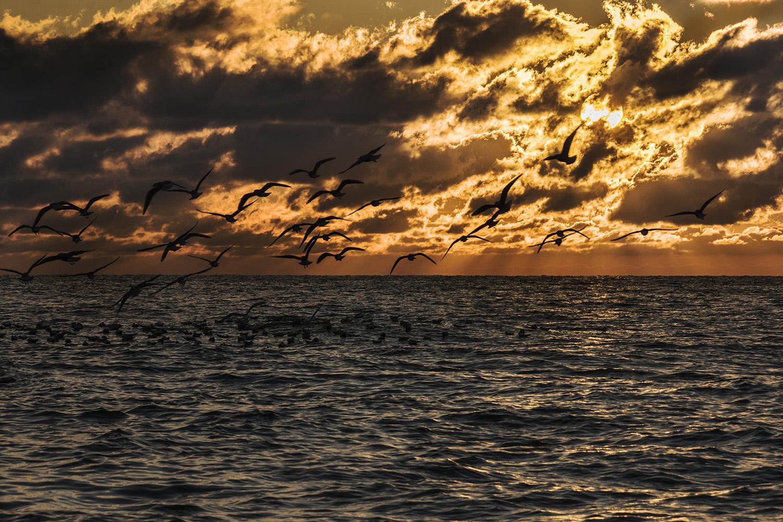 """photo """"На закате"""" tags: nature,"""