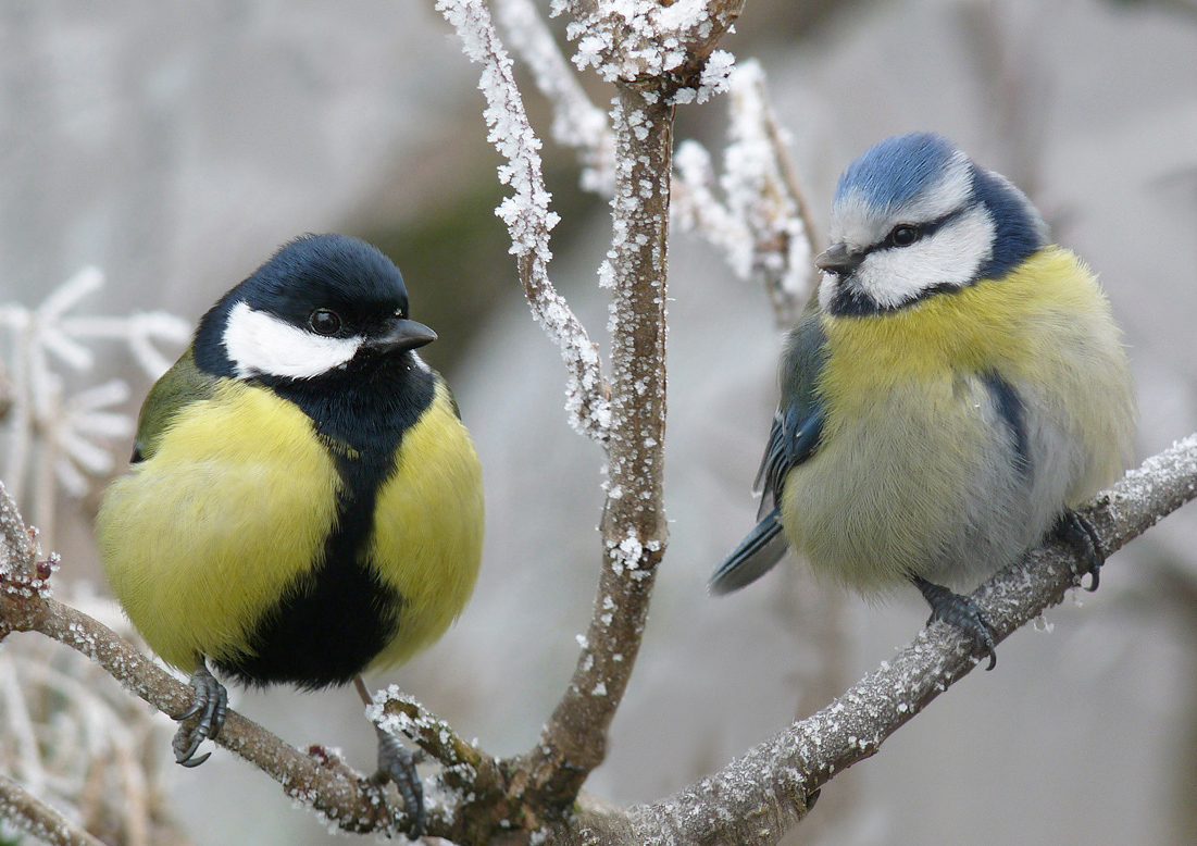 "photo ""***"" tags: montage, wild animals, winter"