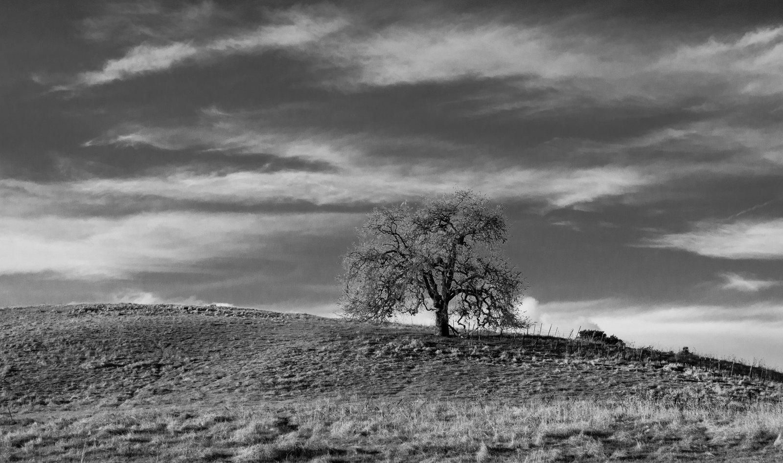 """фото """"Дуб на Горе. Зима"""" метки: пейзаж, черно-белые, oak"""