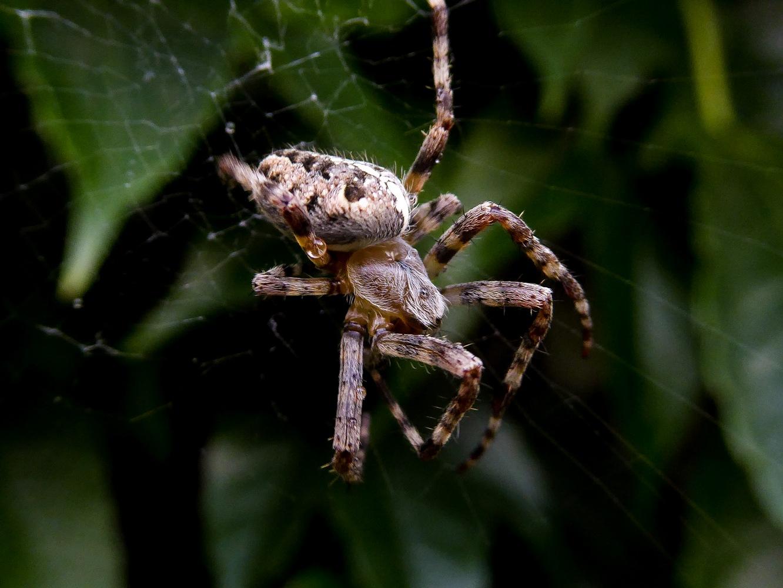 ассоциируется уютом картинка обезьяна паука называют несколько