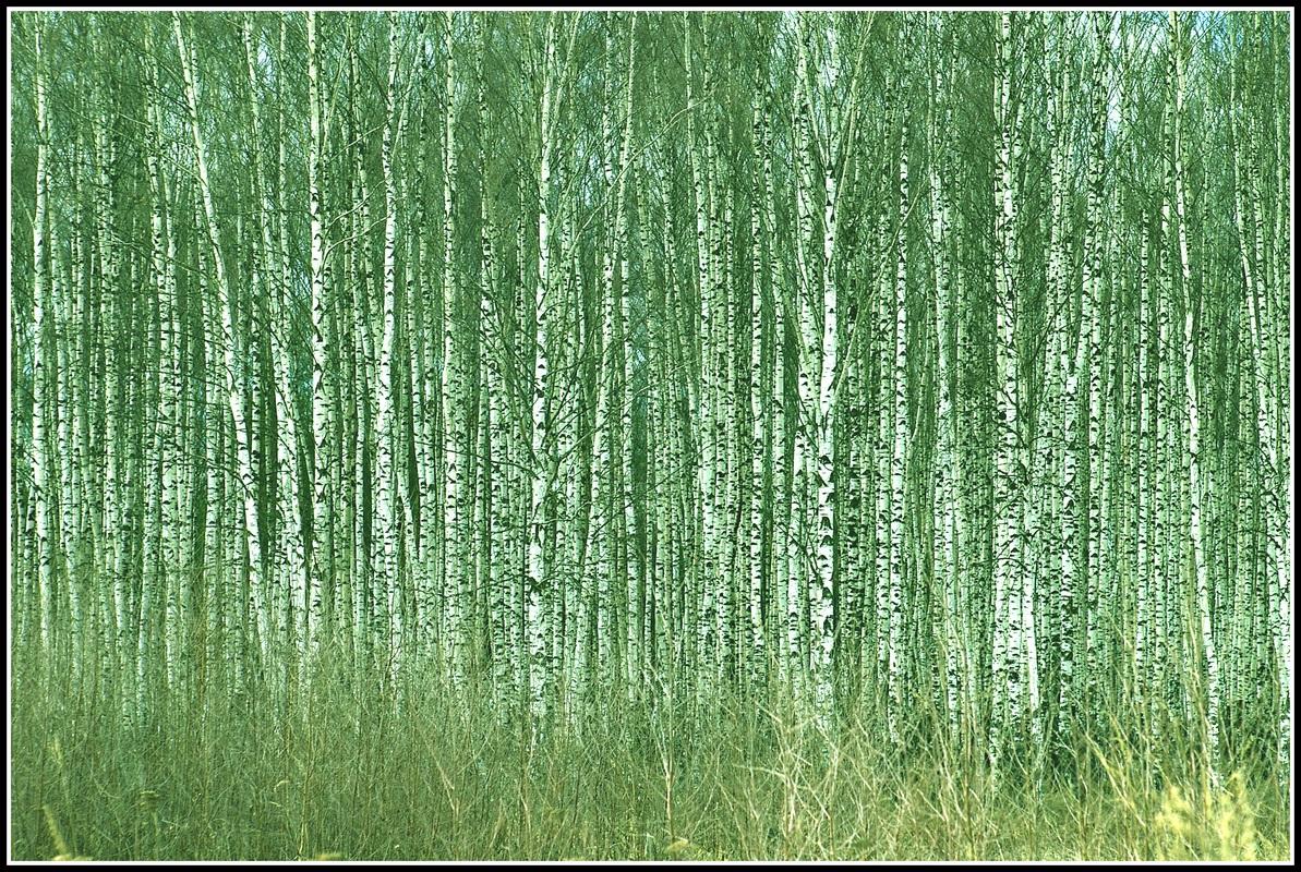 стильный диван картинки на тему зеленый шум производитель снегоходов