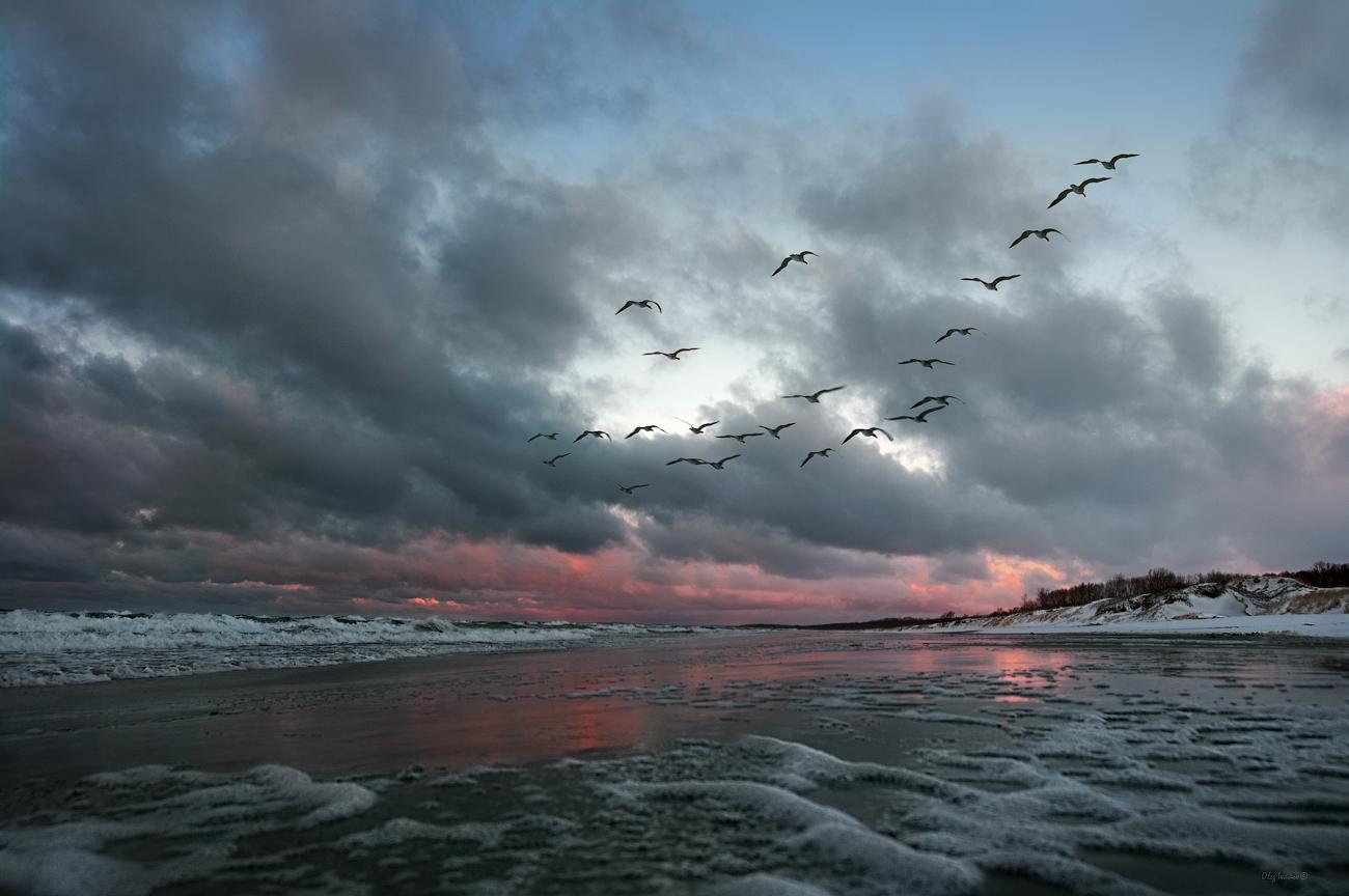 """photo """"***"""" tags: landscape, nature, beach, clouds, snow, winter, Балтийск, Балтика, Калининградская область, птицы"""
