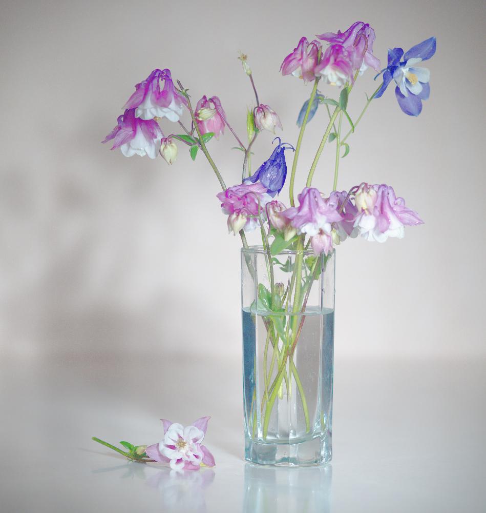 "photo ""***"" tags: still life, flowers"