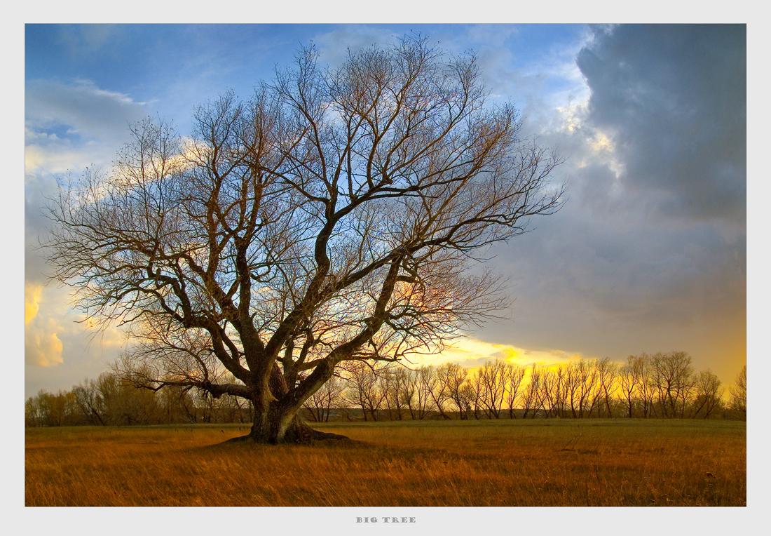 """фото """"Большое дерево"""" метки: пейзаж, облака, осень"""