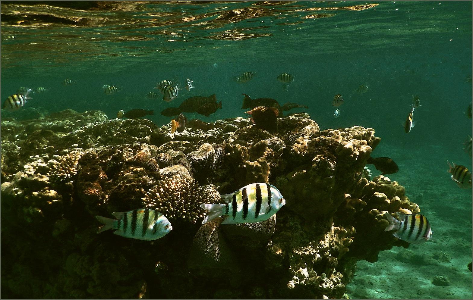 "photo ""***"" tags: underwater, Красное море, дайвинг"