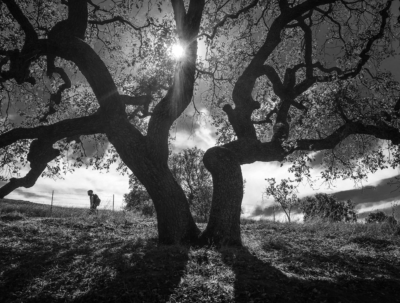 "photo ""Дерево в Контровом Свете"" tags: black&white, tree, Клуб, Костровый Свет"