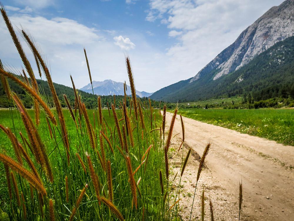"""фото """"Пшеница в горах"""" метки: пейзаж, природа, путешествия, daytime, grass, mountain, nature, perspective, travveling, turkey, Турция, гора, горы, деревья, дорога, кемер, колоски, лес, небо, пшеница, рожь, трава"""