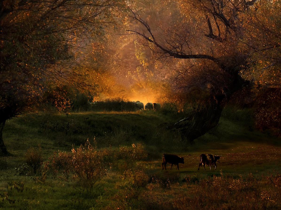 "photo ""***"" tags: landscape, pets/farm animals, sunset"