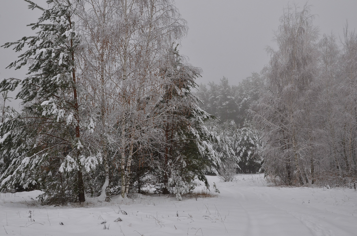 "photo ""***"" tags: landscape, forest, snow, winter, мороз, снегопад"