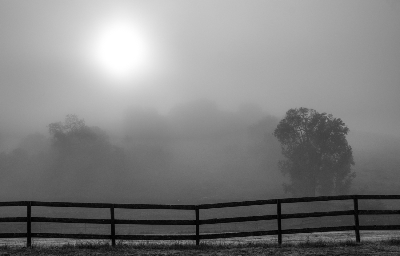 """фото """"Утреннинй Туман, Декабрь"""" метки: пейзаж, черно-белые, morning. fog, туман, утро"""