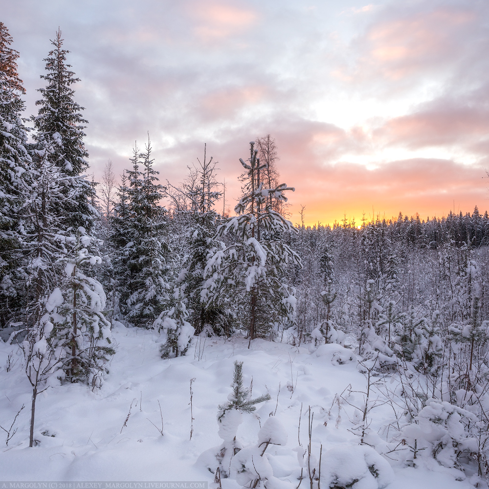 "photo ""***"" tags: landscape, forest, snow, winter, Восход"