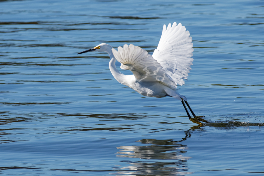 "photo ""Great Egret"" tags: nature, misc., wild animals bird"