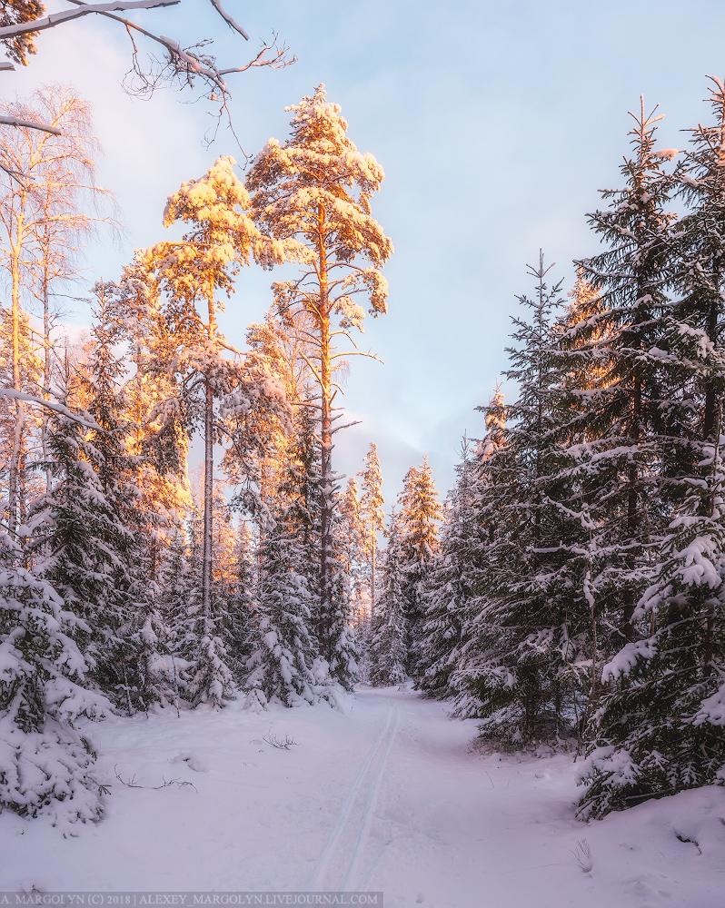 Фото зимний художественный пейзаж леса это