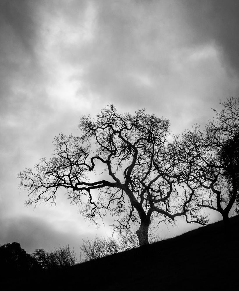 "photo ""Солнце Пробивает Через Облака"" tags: black&white, landscape, tree, облачность"