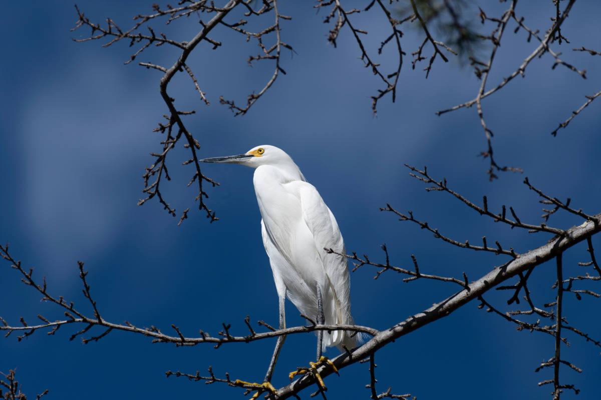 "photo ""Egret"" tags: nature, misc., wild animals bird"