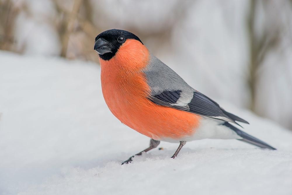 "photo ""***"" tags: nature, птицы"