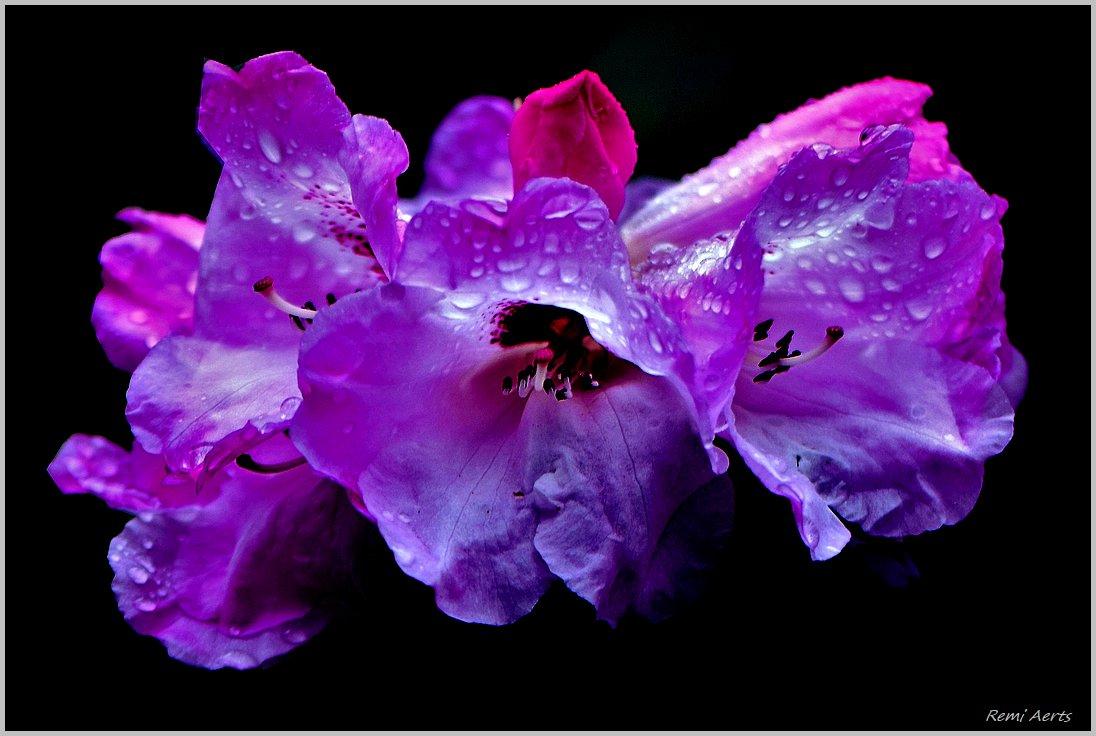 "photo ""***"" tags: nature, macro and close-up, fragment,"