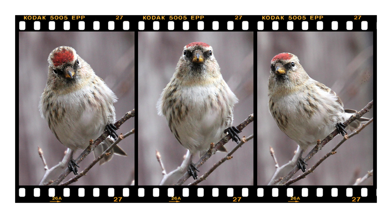 """photo """"Attention, watch the birdie!"""" tags: nature, macro and close-up, montage,"""