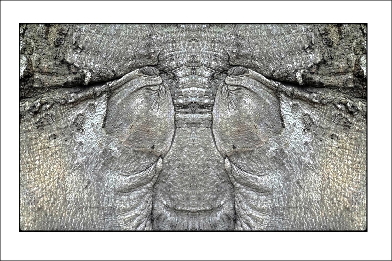 """photo """"the obscene tree"""" tags: digital art, macro and close-up, misc., bark, closeup, mirror, mono, tree"""