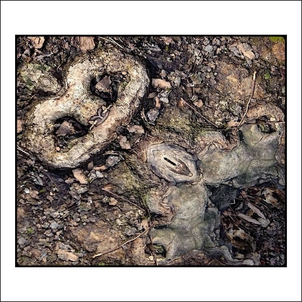 "photo ""frau baubo"" tags: digital art, humor, nature, mirror, root, still"