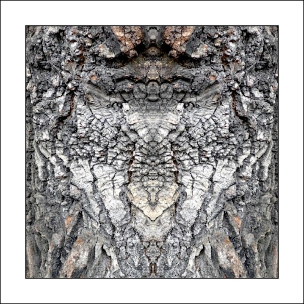 "photo ""baumfaltervogel"" tags: digital art, nature, abstract, bark, closeup, mirror, tree"
