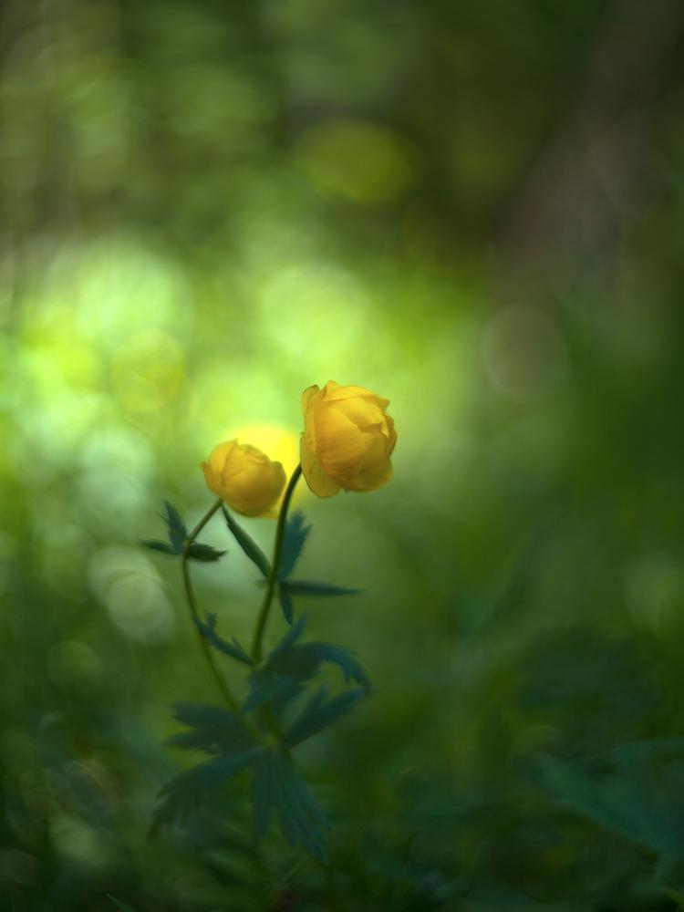 """фото """"Золотые шары"""" метки: макро и крупный план,"""