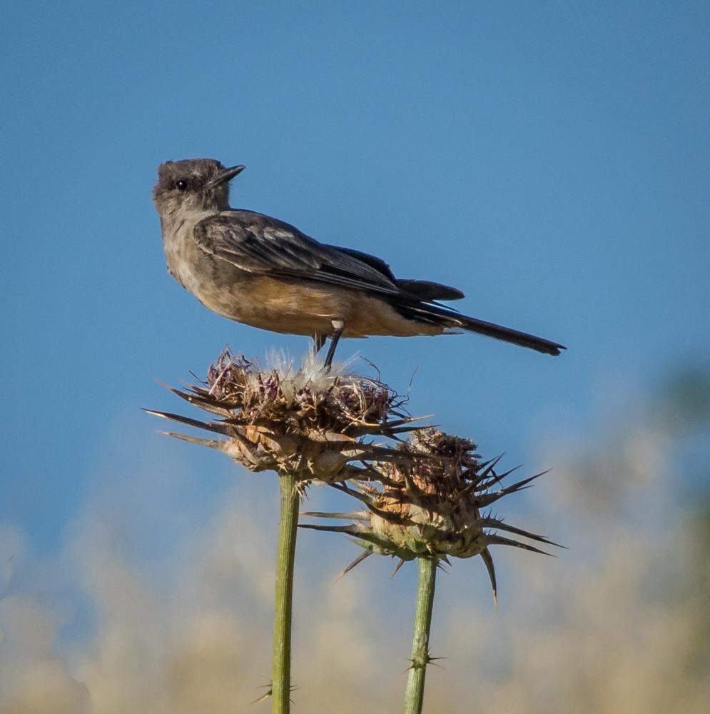 "фото ""Грустная птичка невеличка."" метки: природа, Птичка  Bird"
