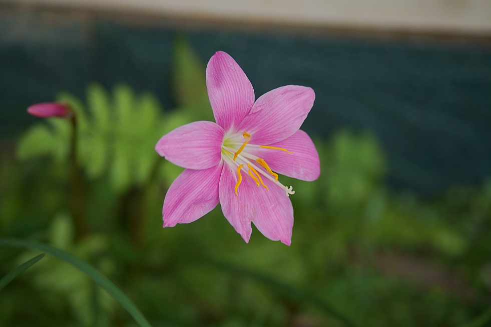 """photo """"flower"""" tags: landscape, nature, travel, Asia, flowers, forest, summer, sun"""