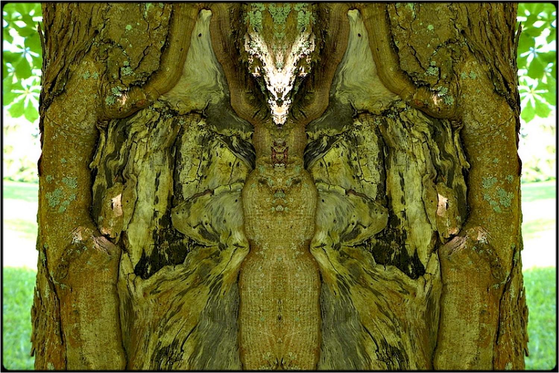 """photo """"tree spirits 02"""" tags: digital art, nature, macro and close-up, bark, close-up, mirror, tree"""