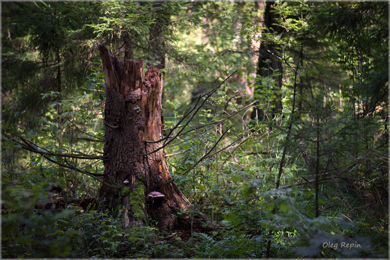 как получить хорошие фотографии в лесу полностью никогда раскрывается