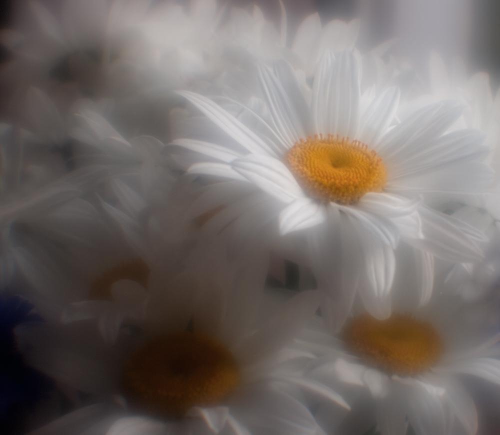 "фото ""Облаком белым..."" метки: природа, цветы"