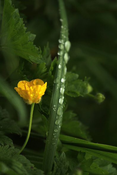 "photo ""tears of rain"" tags: nature, reporting, macro and close-up,"