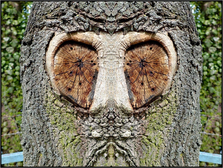"photo ""der herr professor - mister professor"" tags: digital art, nature, macro and close-up, bark, closeup, mirror, tree"