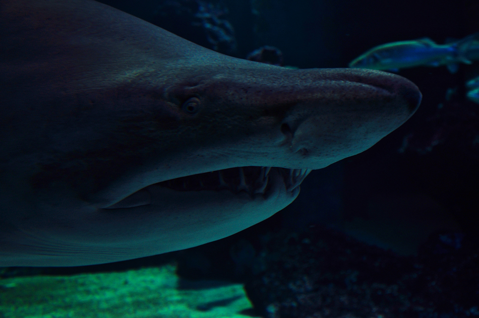 """photo """"***"""" tags: underwater,"""