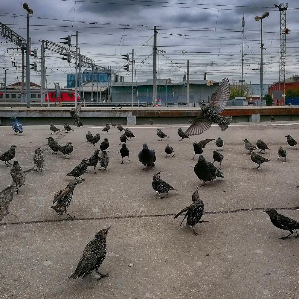 """фото """"Виртуоз и его наблюдатели"""" метки: стрит-фото,"""