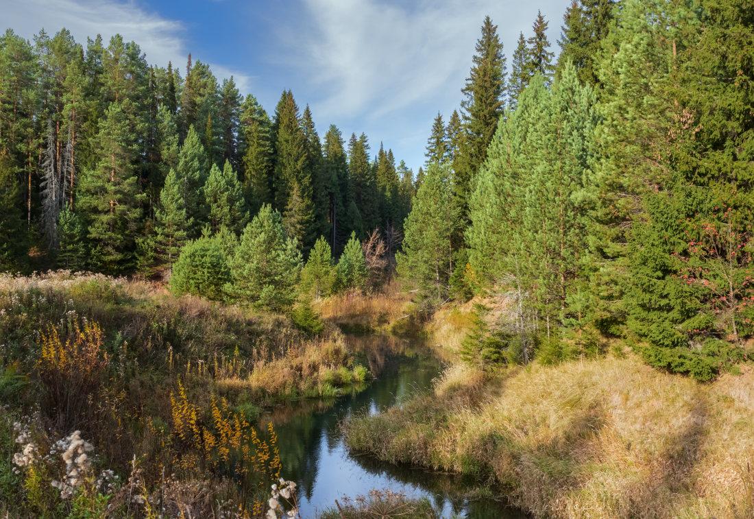 """фото """"В осеннем лесу"""" метки: пейзаж, Речка, деревья, краски, лес, небо, осень, сосны"""