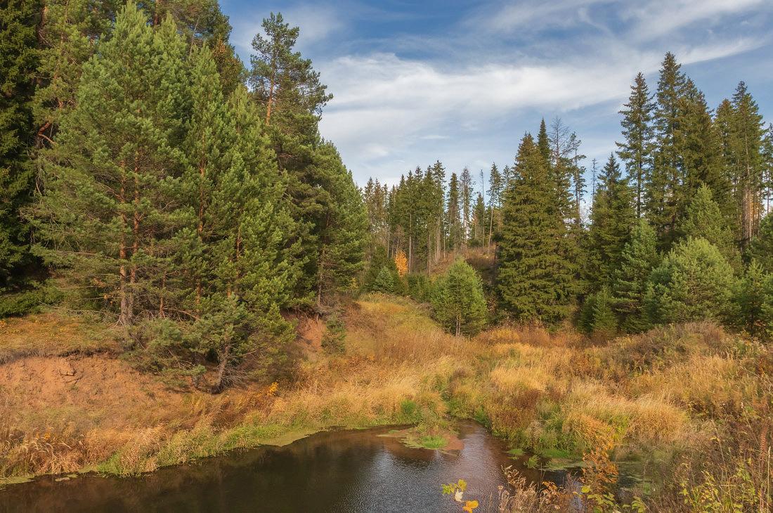 """фото """"Красочное разнотравье осени"""" метки: пейзаж, Речка лес трава листья осень к"""