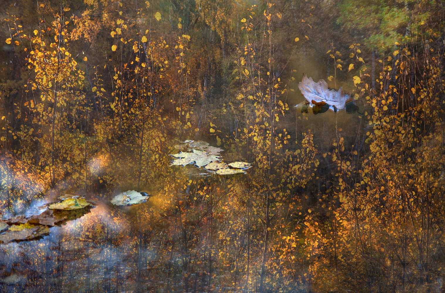 """photo """"***"""" tags: nature, abstract, montage,"""