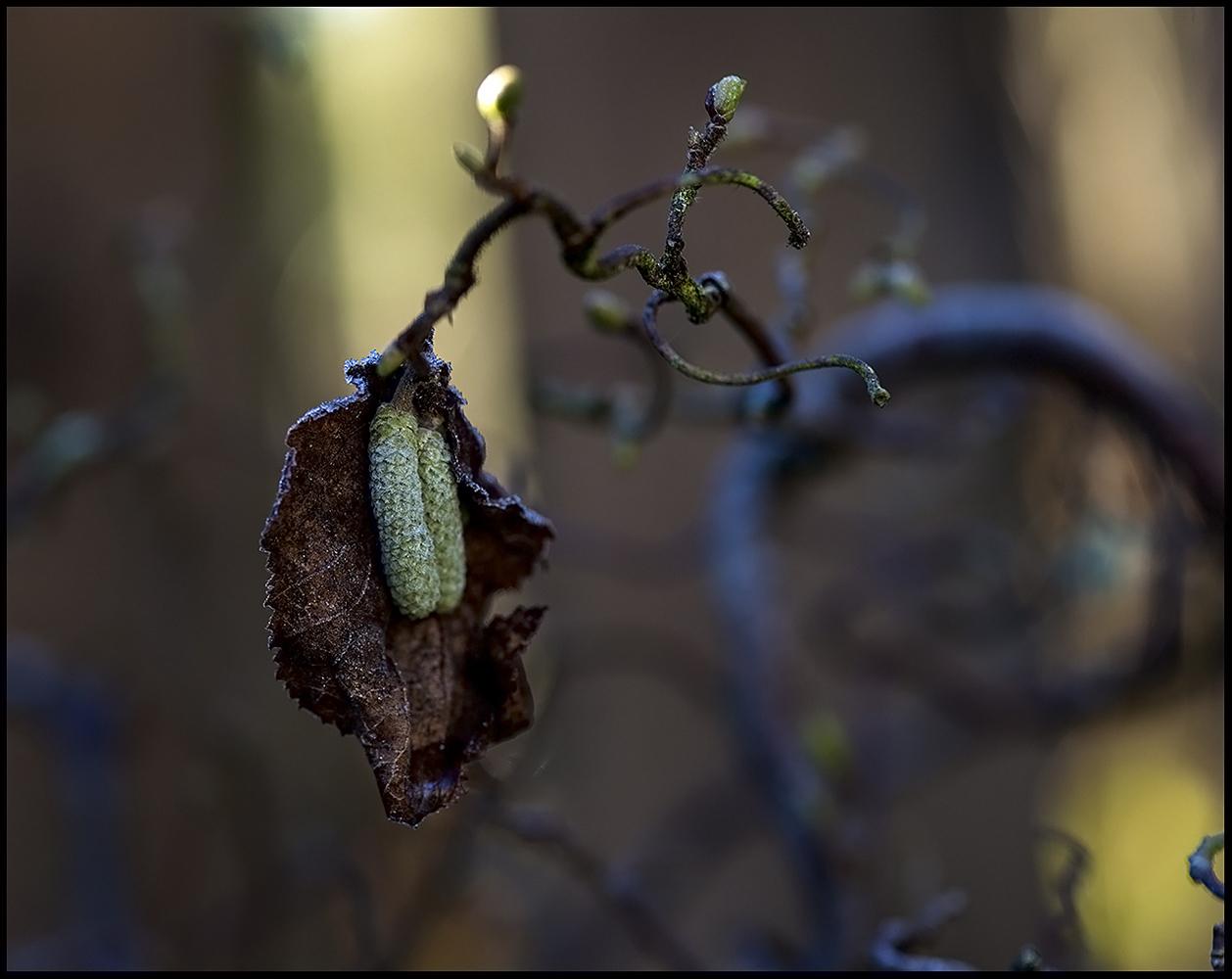 "photo ""***"" tags: nature, genre, macro and close-up,"