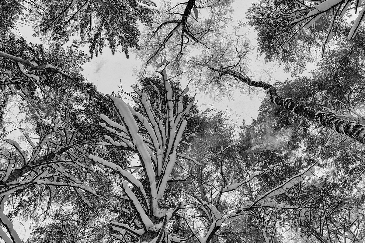 "photo ""***"" tags: black&white, bw, forest, snow, чёрно белое"