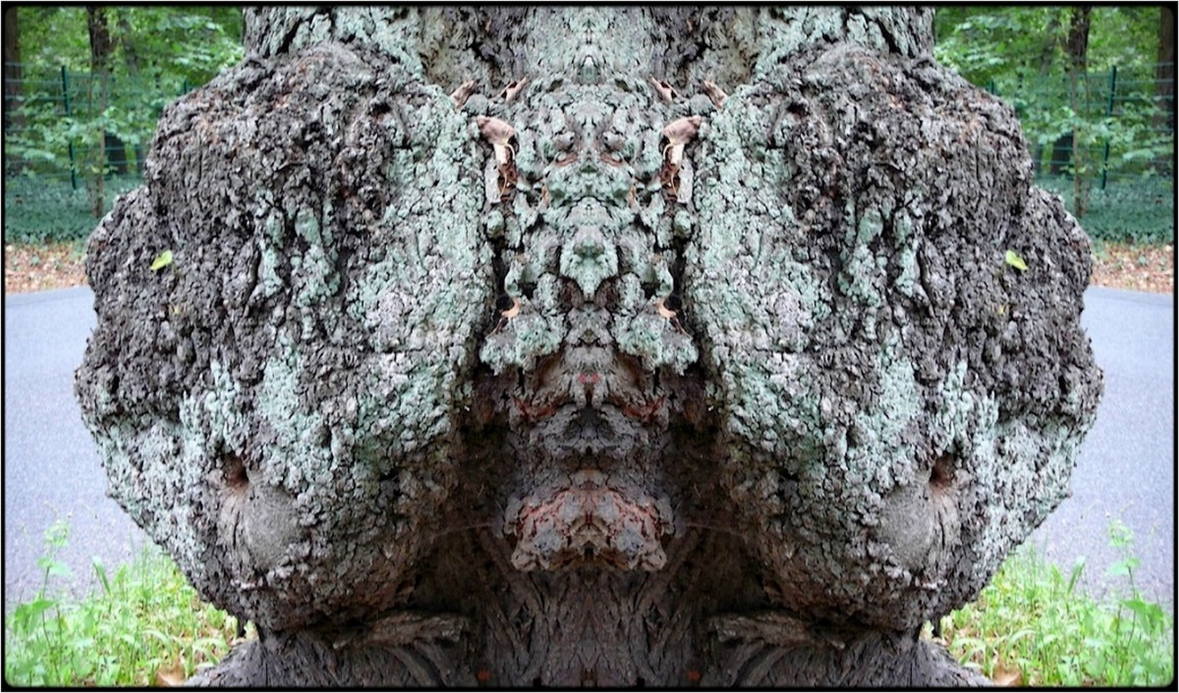 "photo ""stierschädel - bull's head"" tags: digital art, nature, macro and close-up, bark, mirror, tree"