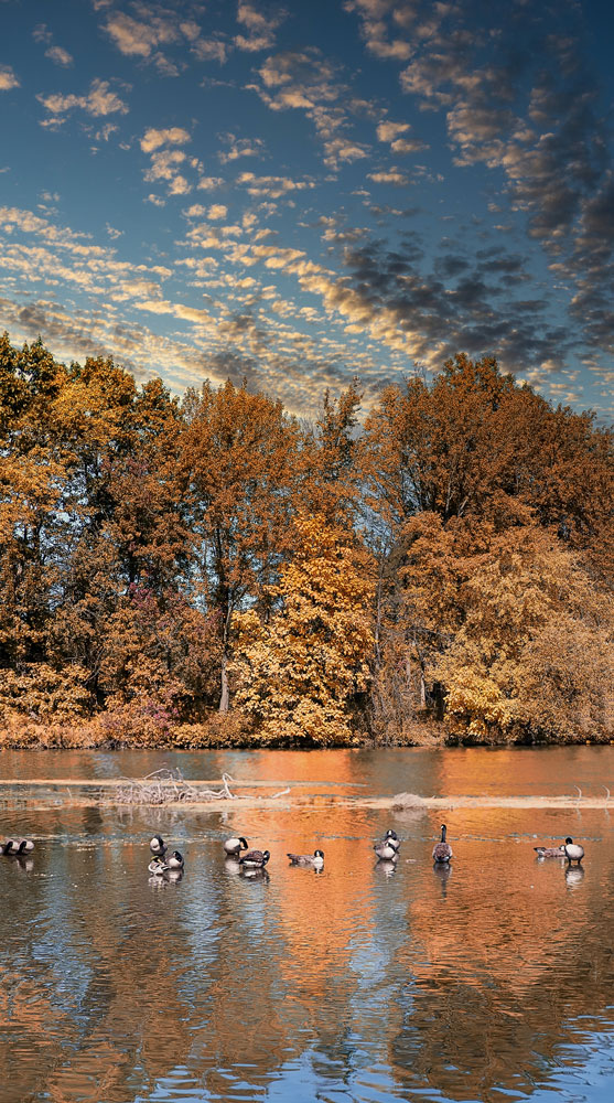 "photo ""утки на панораме"" tags: panoramic,"