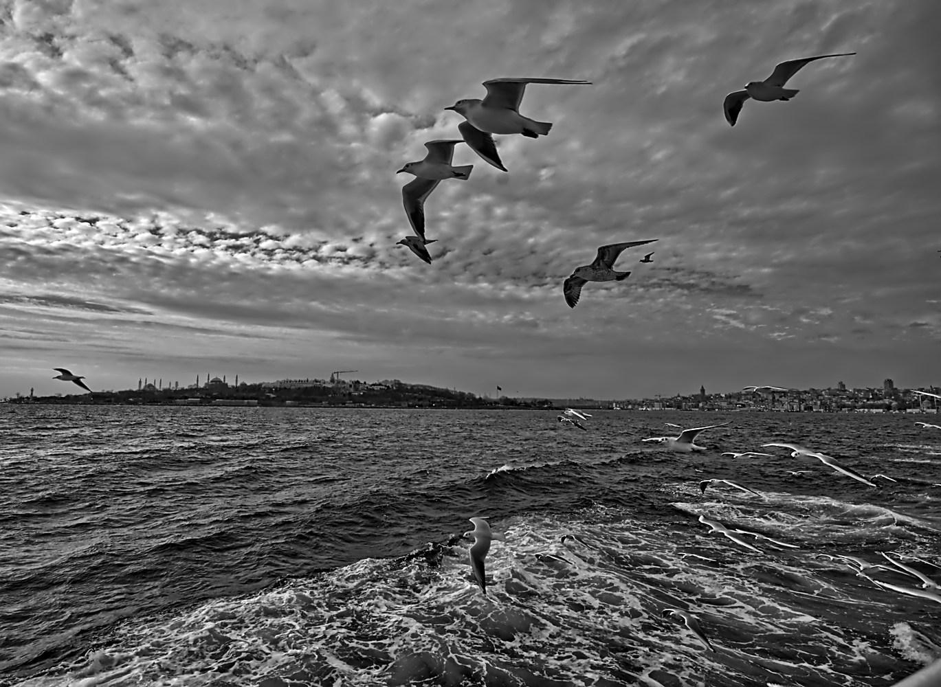 "photo ""Seagulls over Bosphorus"" tags: landscape, travel, nature,"
